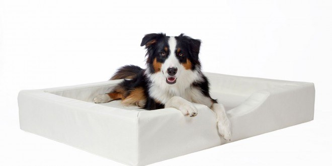 kunstleder hundebetten testsieger preisvergleich uvm. Black Bedroom Furniture Sets. Home Design Ideas