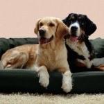 exklusive hundebetten