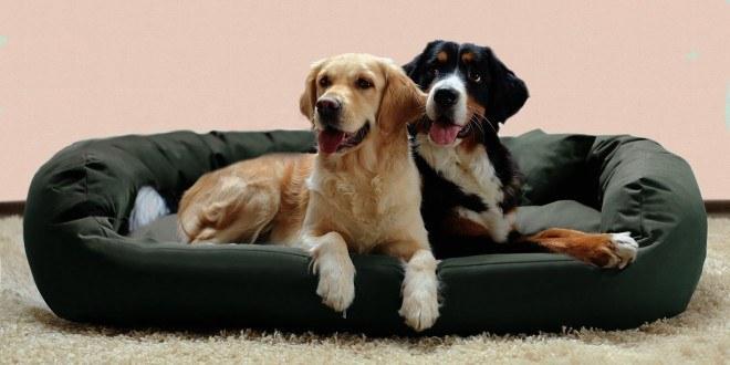 exklusive hundebetten testsieger luxus hundebetten. Black Bedroom Furniture Sets. Home Design Ideas