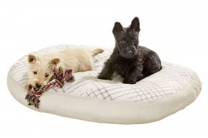 Karlie Quantum Med Hunde Kissen